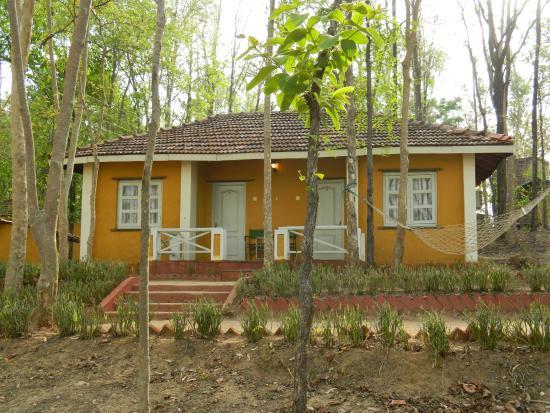 Wild Chalet Resort - Mocha - Mandla Image