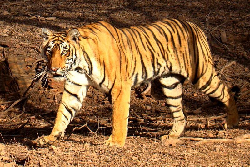 Pilibhit Tiger Reserve Image