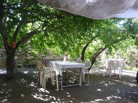 Penguin Garden Restaurant - Fort Road - Leh Image