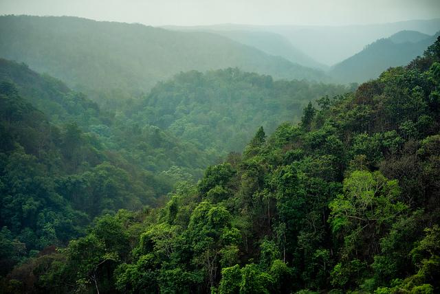 Anshi National Park - Dandeli Image