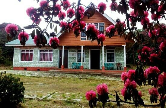 Varsey Rhododendron Sanctuary - Sikkim Image