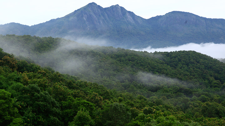Silent Valley National Park - Palakkad Image