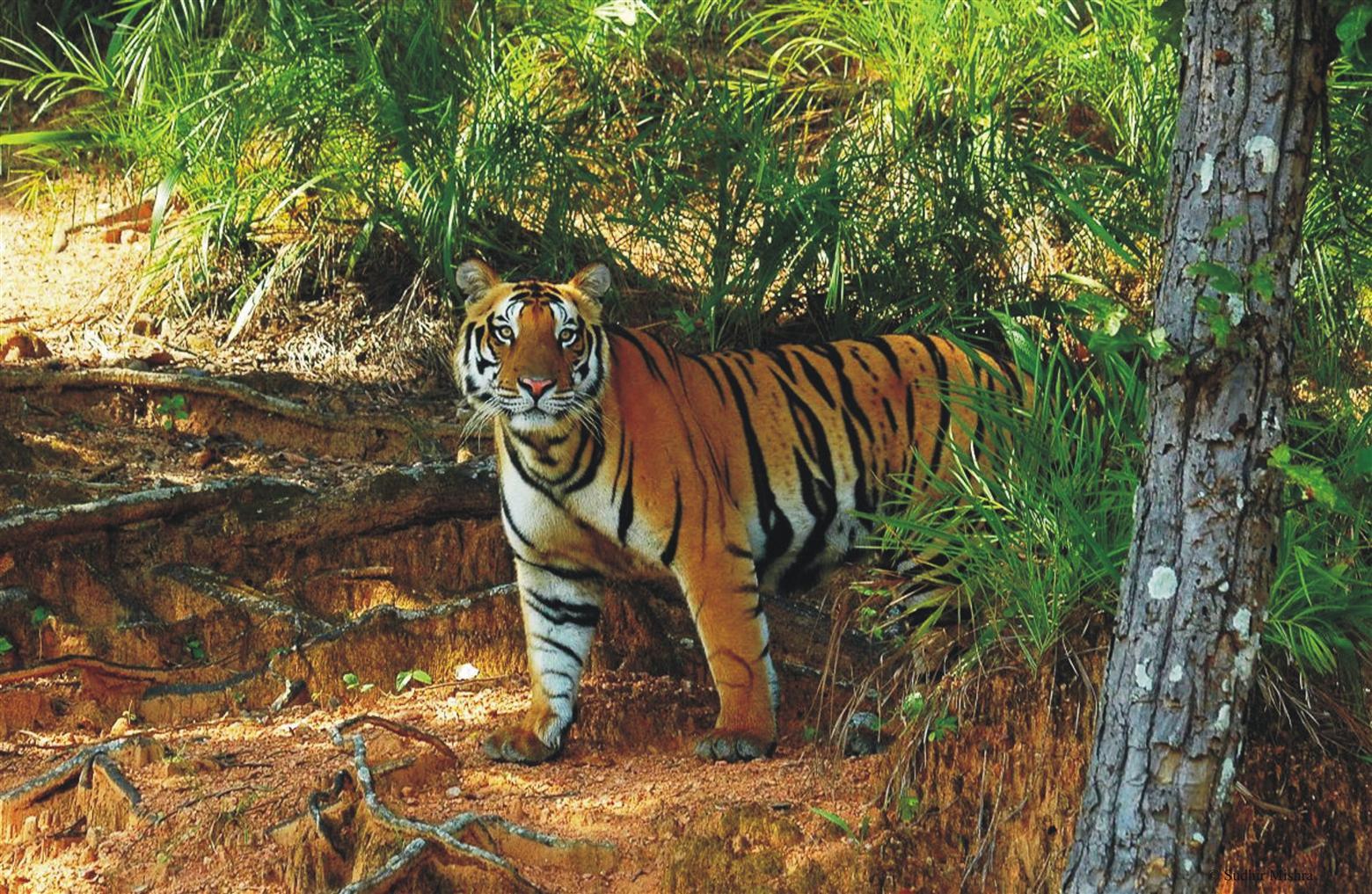 Satkosia Tiger Reserve - Bhubaneswar Image