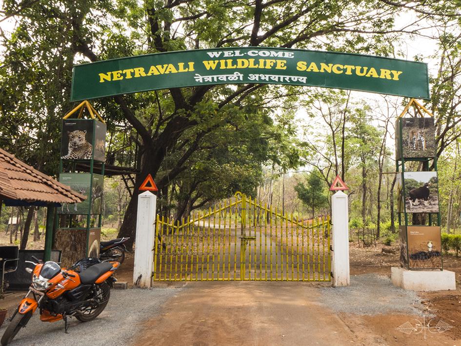Netravali Wildlife Sanctuary - Goa Image