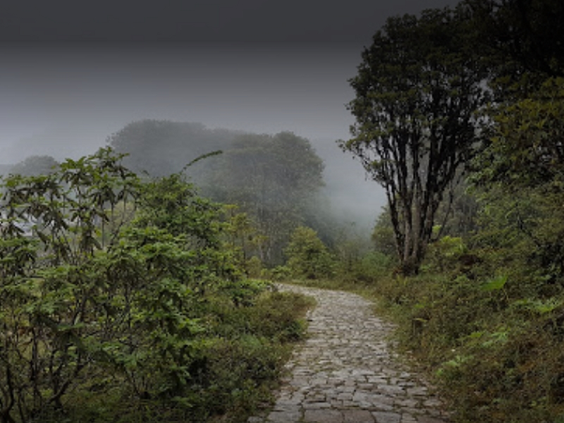 Barsey Rhododendron Sanctuary Trek - West Sikkim Image