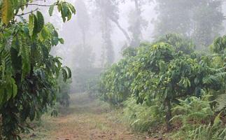 Sakleshpur Image