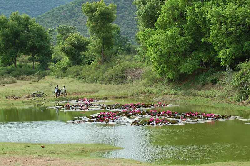 Nilgiri Biosphere Nature Park - Coimbatore Image