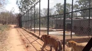 Tavarekoppa Tiger And Lion Safari - Shimoga Image