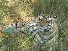 Thyvare Koppa Lion And Tiger Reserve - Uttara Kannada Image