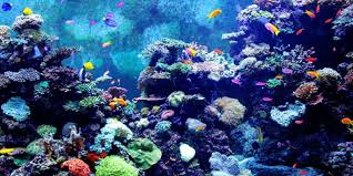Sea World Aquarium - Rameshwaram Image