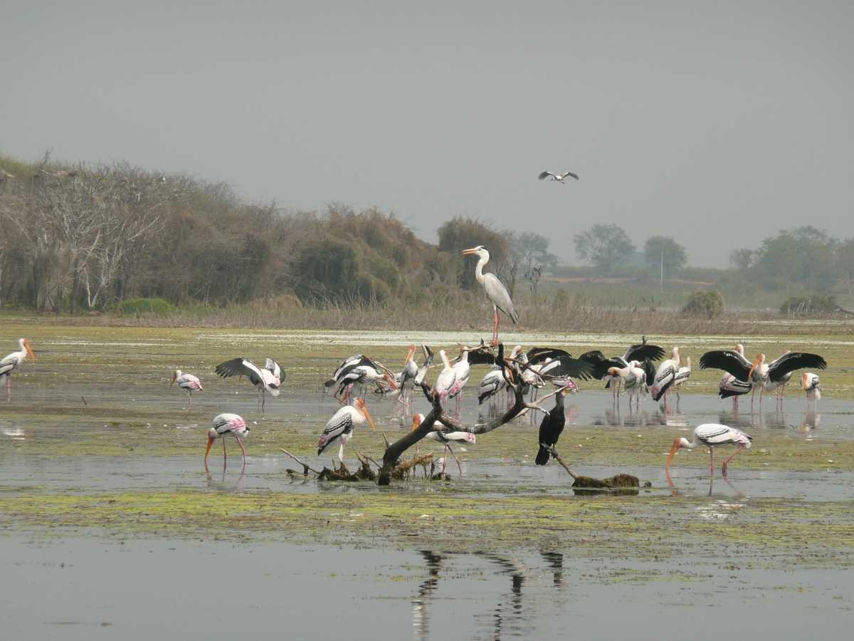 Water Bird Sanctuary - Rameshwaram Image