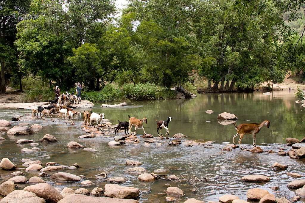 Chinnar Wildlife Sanctuary - Munnar Image