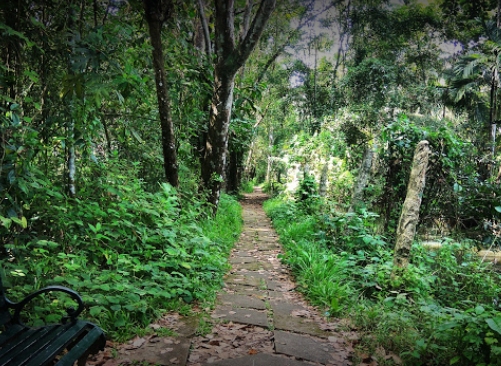 Kumarakom Bird Sanctuary - Allepey Image
