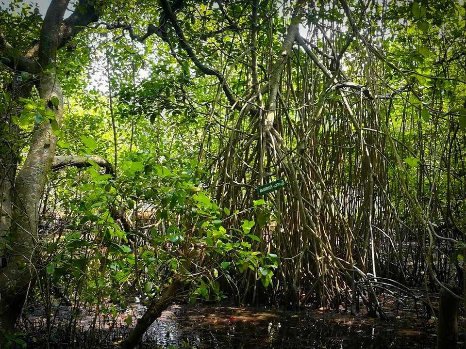 Mangalavanam Bird Sanctuary - Kochi Image