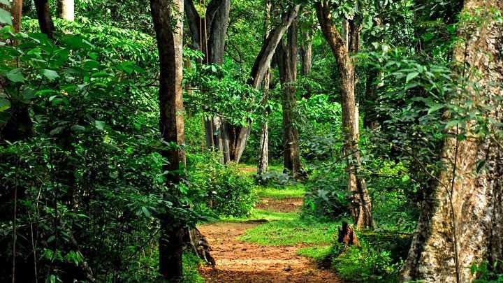 Shenduruny Wildlife sanctuary - Kollam Image