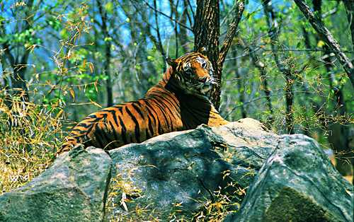Wayanad Wildlife Sanctuary - Wayanad Image
