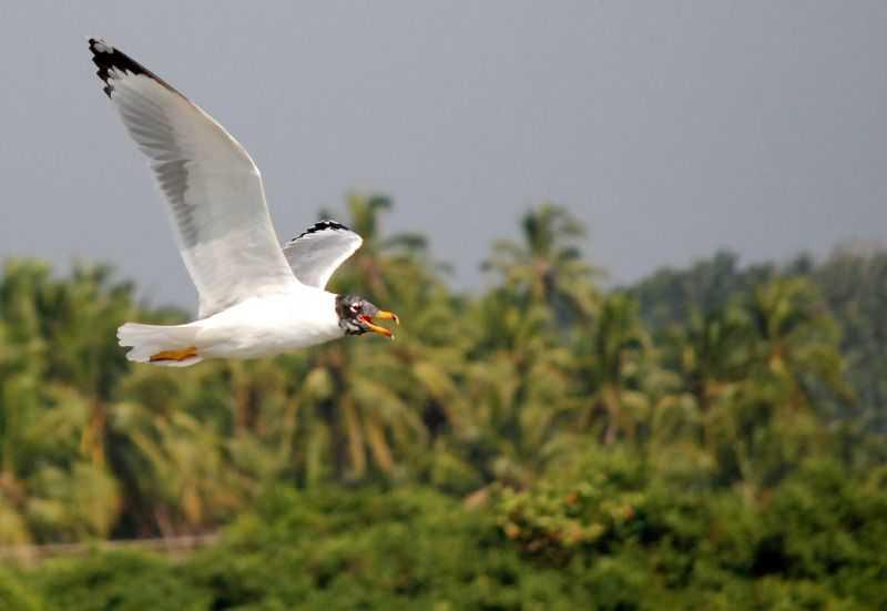 Kadalundi bird sanctuary - Kozhikode Image
