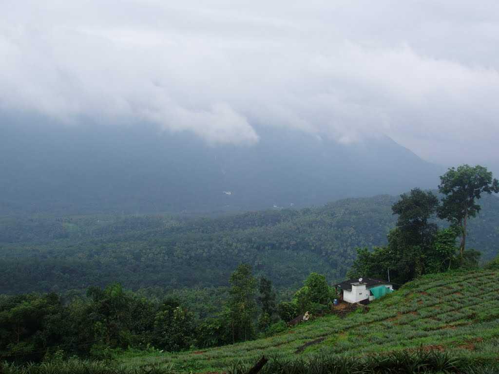 Thumpachi Kalveri Samuchayam - Idduki Image