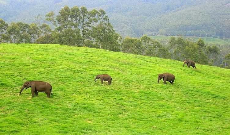 Mathikettan Shola National Park - Idduki Image