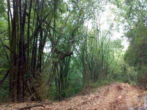 Malom Wildlife Sanctuary - Kasargod Image