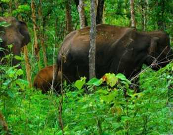Parappa Wildlife Sanctuary - Kasargod Image