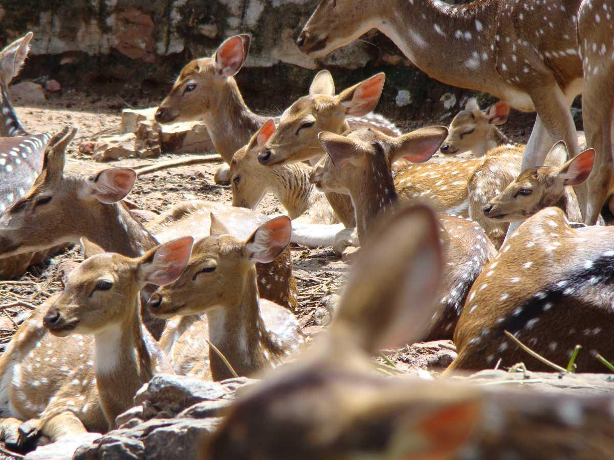 Deer Park - Tirupati Image
