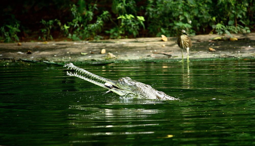 Indira Gandhi Zoological Park - Visakhapatnam Image