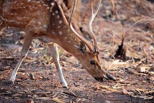 Srisailam Tiger Reserve - Srisailam Image