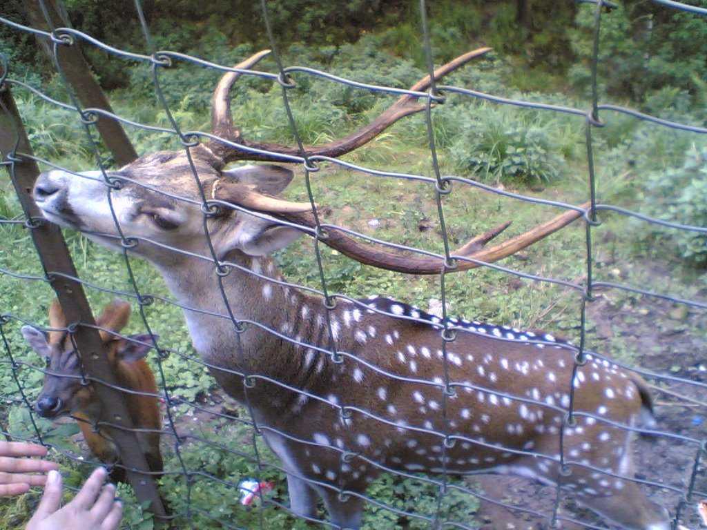 Deer Park, Kurseong - Kurseong Image