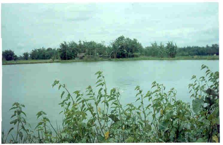 Ganga Pukhari - Nalbari Image