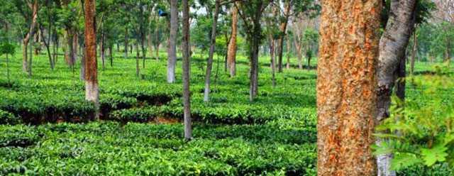 Pukhuria Beel - Darang Image