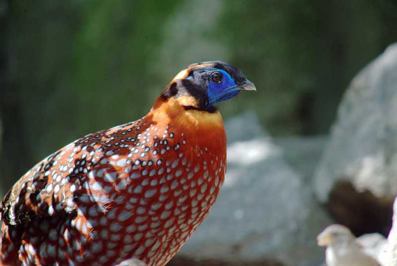 Kohima Zoo - Kohima Image