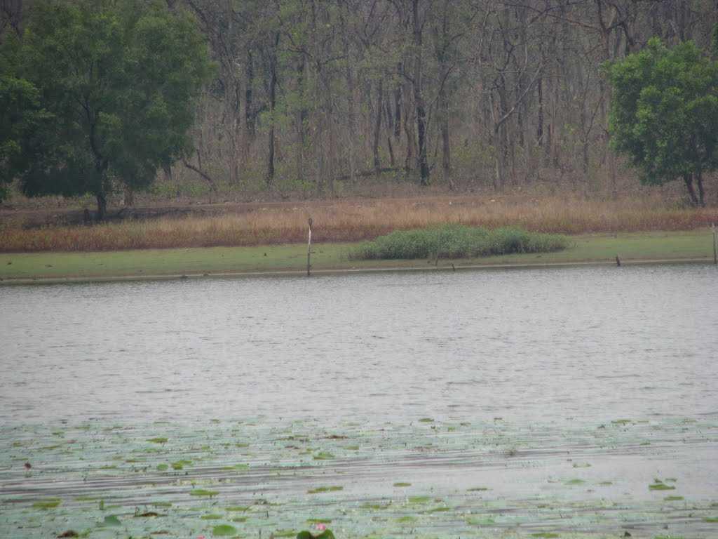 Tadoba National Park - Chandrapur Image