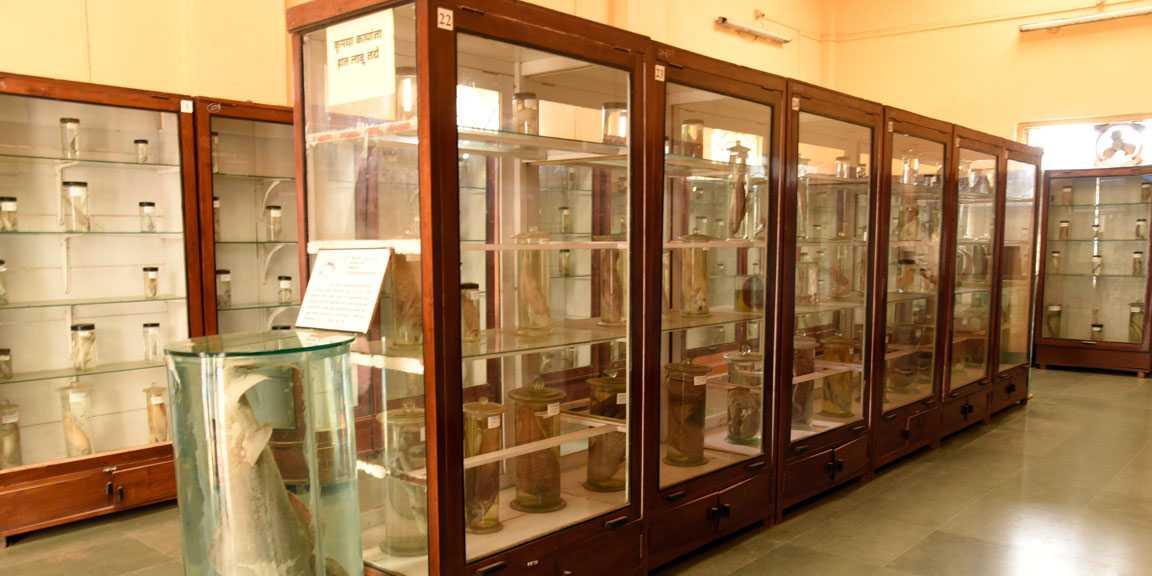 Ratnagiri Marine Museum - Ratnagiri Image