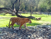M.C. Zoological Park, Chhat Bir Zoo - Zirakpur Image
