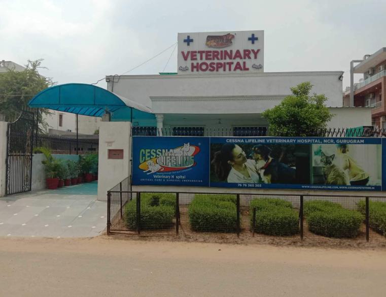 Cessna Lifeline Veterinary Hospital - Sector 38 - Gurgaon Image