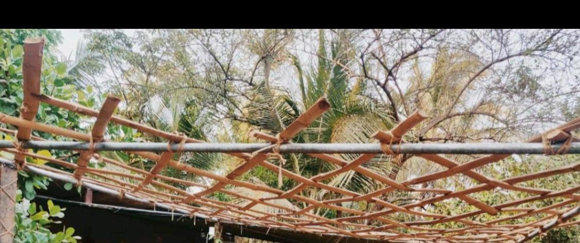 Lazy Llama Hostel - Vagator - Goa Image