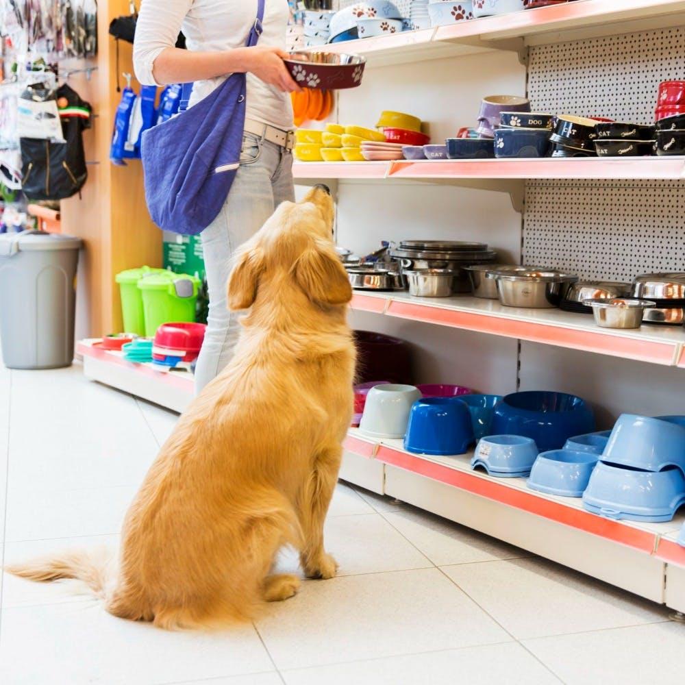 Ginni Pet Shop - Bana Image