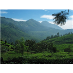 General Tips on Nilgiri Hills