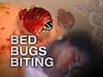 Bug Buster - Bed Bug Treatment