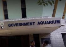 Government Aquarium - Bangalore