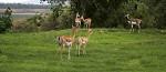 Madhai Wildlife Resort - Hoshangabad