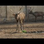 Gwalior Zoo - Gwalior