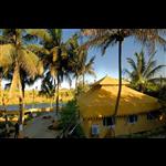 Mango Safari Camp - Sasan - Gir