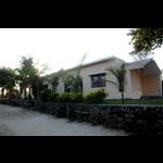 Resort Palm Pair - Dhunwadhar Road - Jabalpur