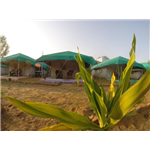 Pushkar Village Camp Resort - Panch Kund Road - Pushkar