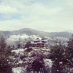 Woods Chanshal - Shimla