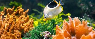 Bangalore Aquarium - Bangalore