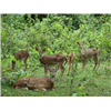 BRT Wildlife Sanctuary
