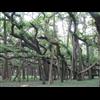 Acharya Jagadish Chandra Bose Indian Botanic Garden - Howrah